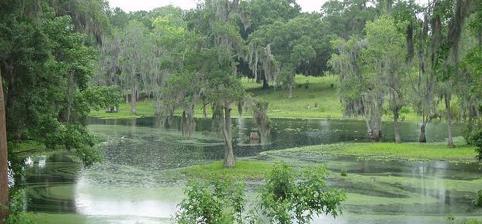 Little Orange Creek Nature Park and Preserve